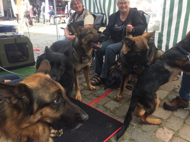 Hundehygge