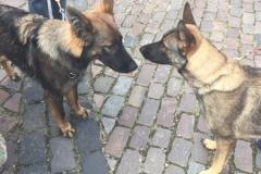 Eenar og Doris
