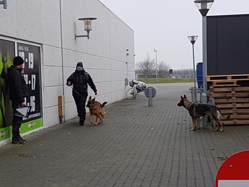 Anja og Eros som hjælpe hund for Asti